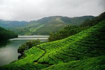 tea covered mountainscape in Sri Lanka